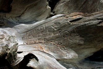 Part of a tree with engravement: 'Never forget'