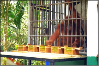 Monkey in a cage trying to grab something
